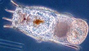 ag_02_plankton